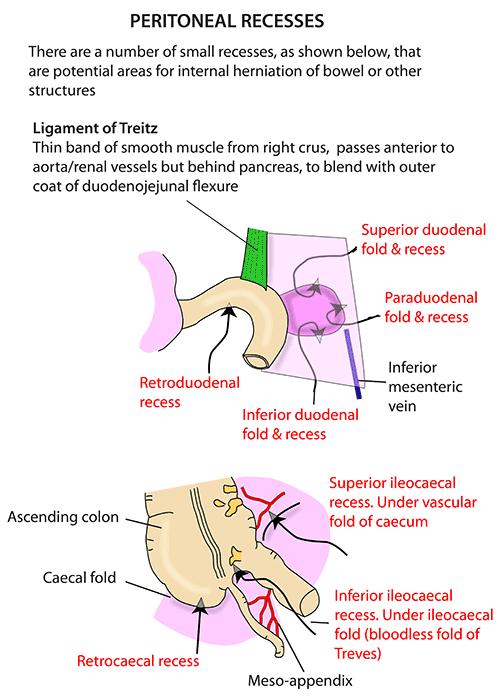 Instant Anatomy Abdomen Areasorgans Peritoneum Peritoneal