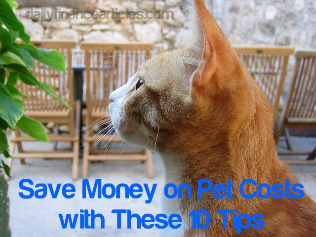 Aegean Cat Cost