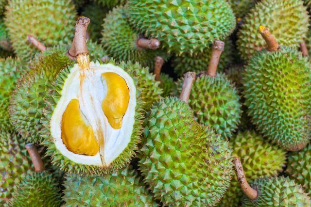 Video Kebun Durian Musang King