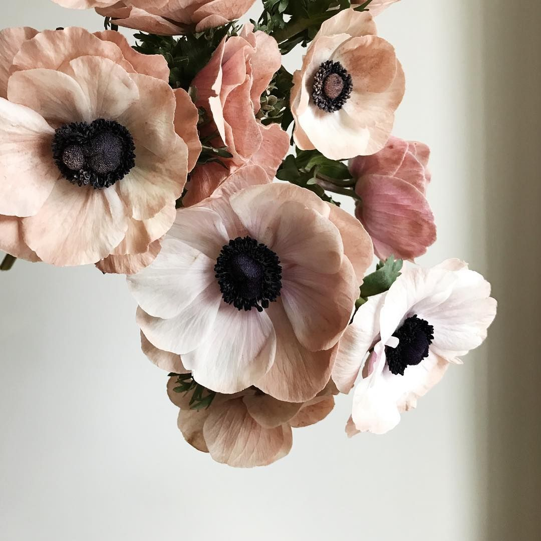 Lori Orlando On Instagram Over The Past Few Years These Dusted Anemone Have Become A Love Day Tradition Of Ou Anemone Flower Flower Images Beautiful Flowers