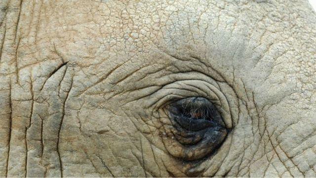 1_raju-elefante-diarioecologia.jpg