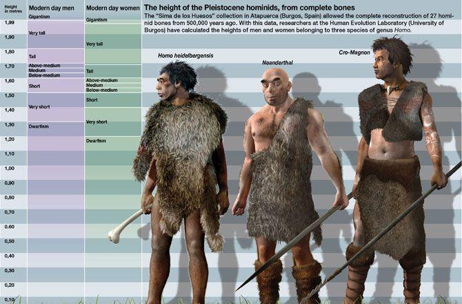homo heidelbergensis vs neanderthal vs cro magnon - i like how, Skeleton