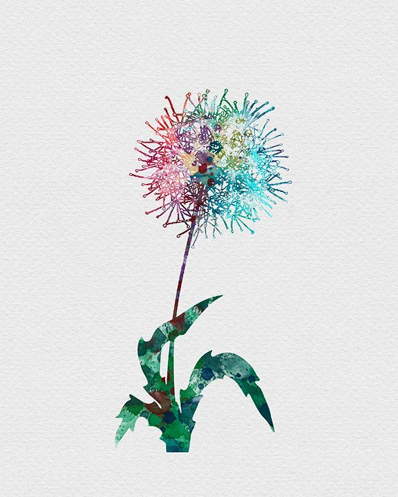 Dandelion Flower Watercolor Art Print Dandelion Art Watercolor