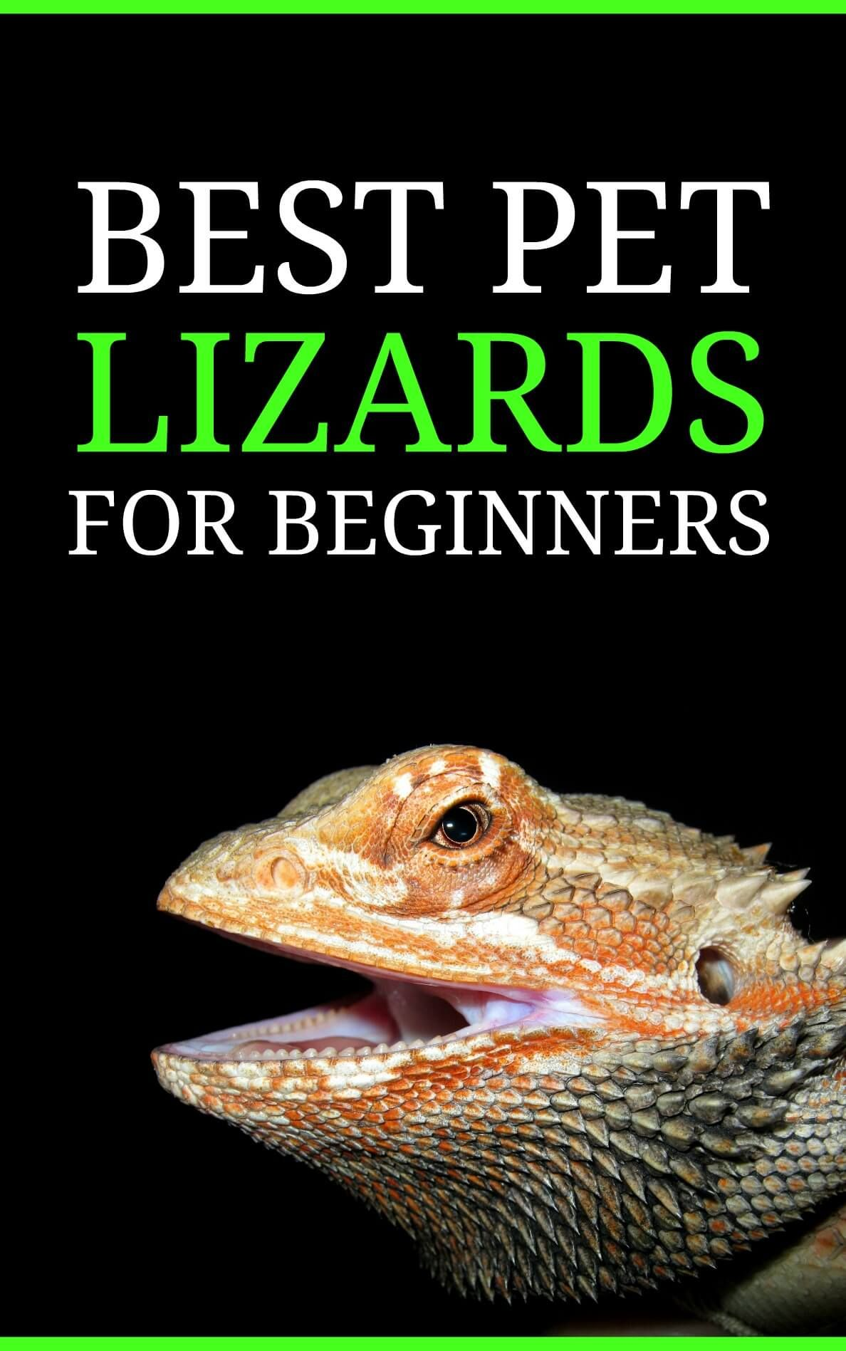 Looking For Your Very First Pet Lizard This List Discusses The