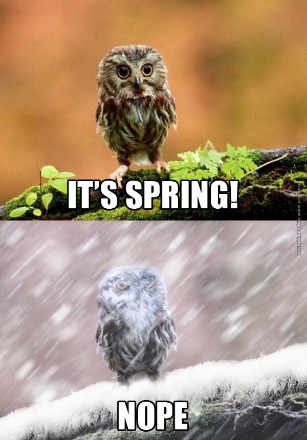 Image result for it's spring and then it's not owl