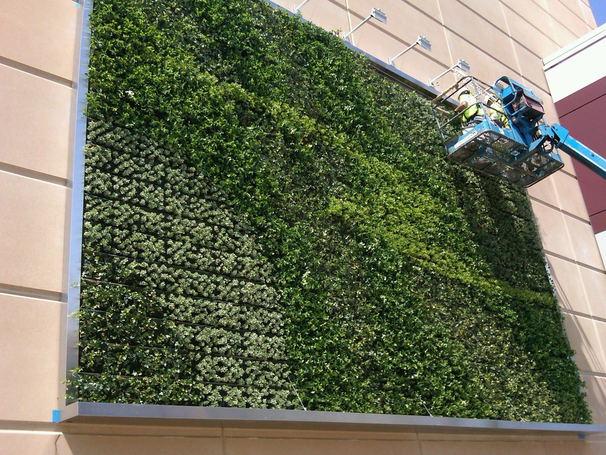 the ultimate guide to living green walls vertical green on live wall id=36320
