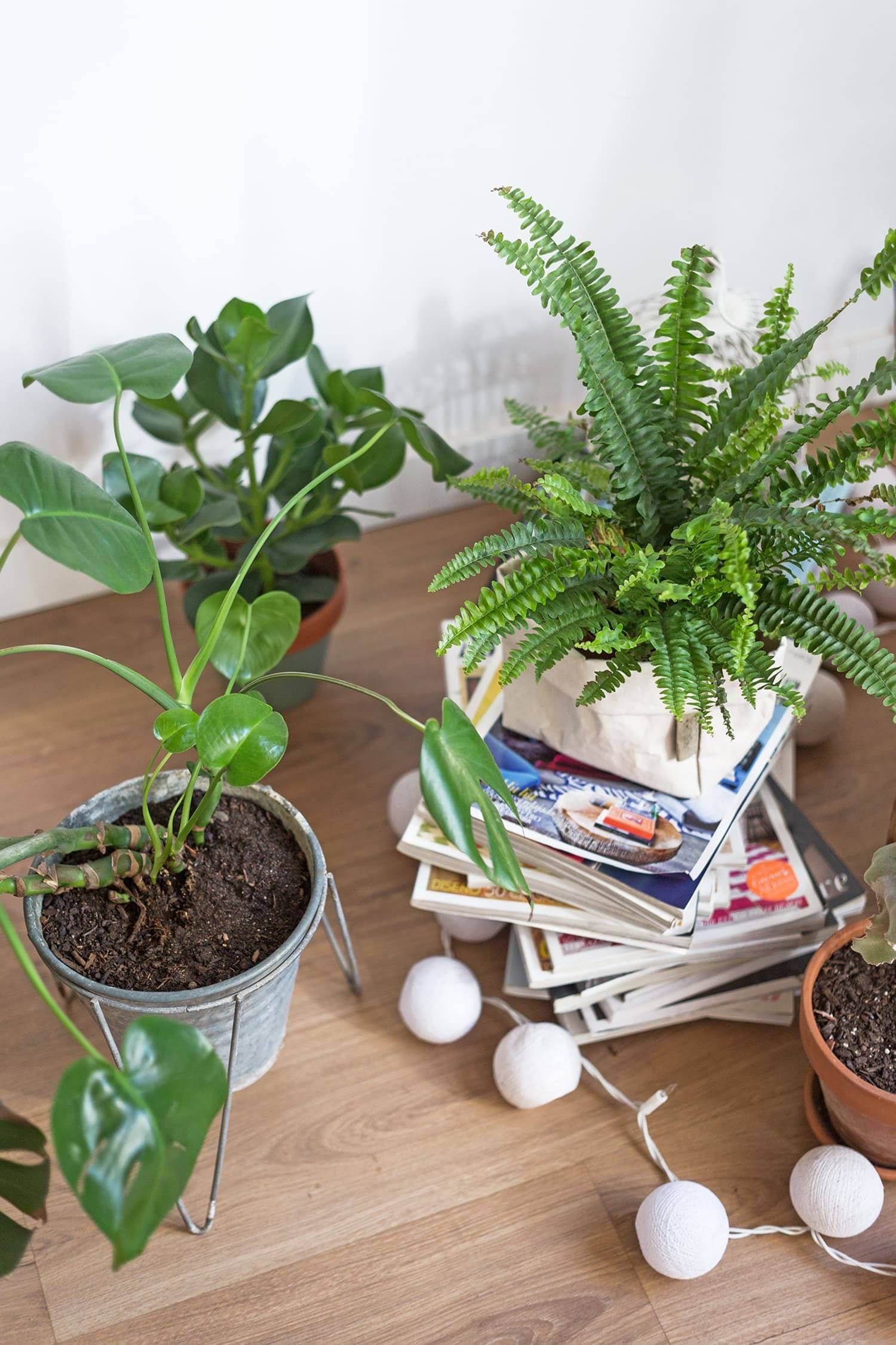 29 Plant Hacks to Upgrade Your Green Thumb, Practically for Free is part of Plant hacks, Plants, Plant care, Green thumb, Indoor plants, Rustic remodel - Whether your thumb is green or black, whether you have one plant or a jungle's worth, here are some plantcare and gardening tips that can help keep your greenery not only alive, but lush