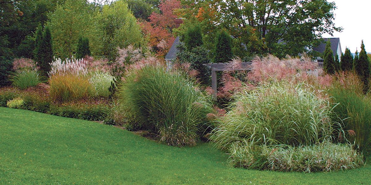 Designing With Grasses Finegardening Grasses Landscaping Shade Perennials Ornamental Grasses