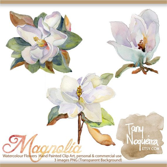 Clip Art Magnolia Flores Png Fondo Transparente Jpg Flor Etsy Clip Art Etsy Watercolor Art Images