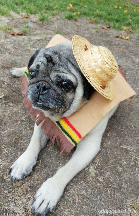 Diy Halloween Costume For Dogs Diy Dog Costumes Dog Halloween