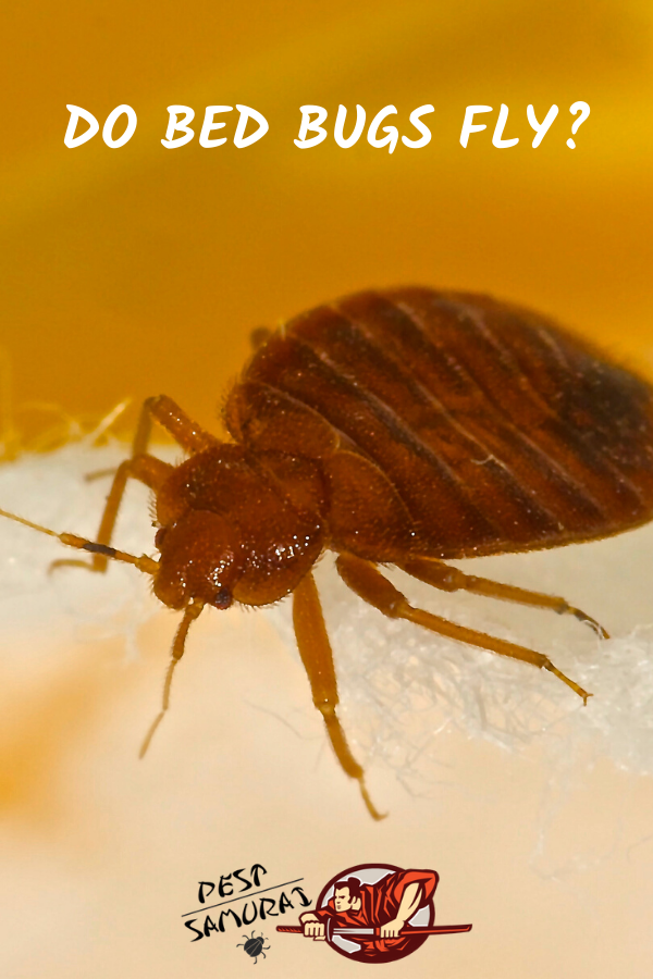 We can find bed bugs in different places and plenty of