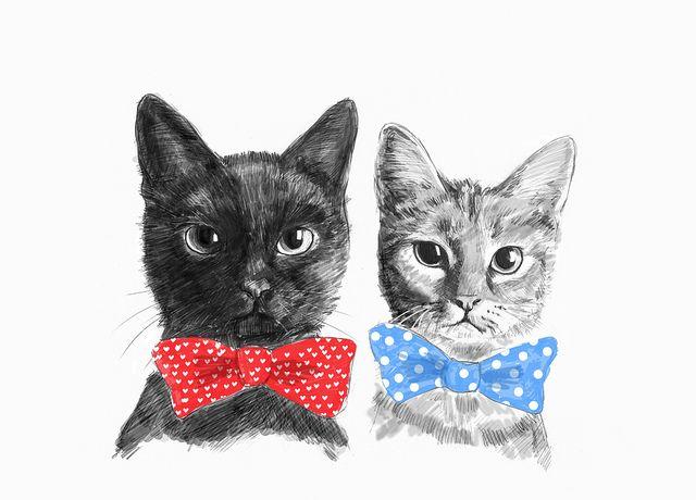 Untitled in 2020 Cat art, Pretty cats, Crazy cats