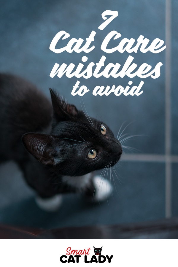 Cat Care First Time Cat Owner Want To Make Sure Your Cat Is Content Get To Know How To Care For Your New Kitten In 2020 Cat Care Raising Kittens First