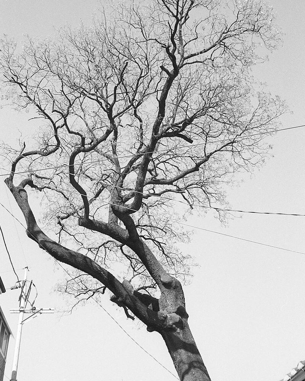 Shared by baksooyeon #landscape #contratahotel (o) http://ift.tt/1Q7s7Z2 2016.02.06 이 고난 끝에 행복이 있길  Tmax 100 - #라이카 #m6 #티맥스 #일상사진 #스냅사진 #데일리 #일상 #서울 #한국 #vscocam #vscogood #leica #leicam6 #35mm #tmax #bw #film #filmphotography #filmisnotdead #bwphotography #daily #instadaily #instagood #all_shots #instasize  #cityscape #seoul #korea #streetphotography