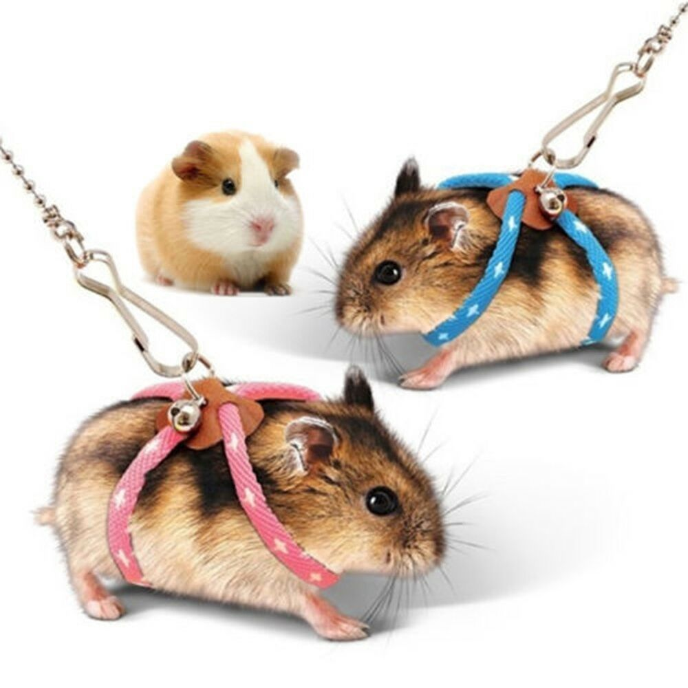Provide A Full Protection In Stomach And Neck When Walking With Your Hamster 1 X Small Animal Leash Rope Adjustable And Sma Baby Hamster Hamster Toys Hamster
