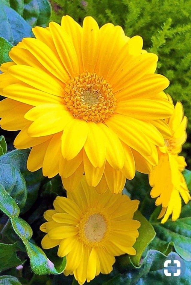 Épinglé par Myriam Moix sur Fleurs | Fleurs, Fleur jardin et ...