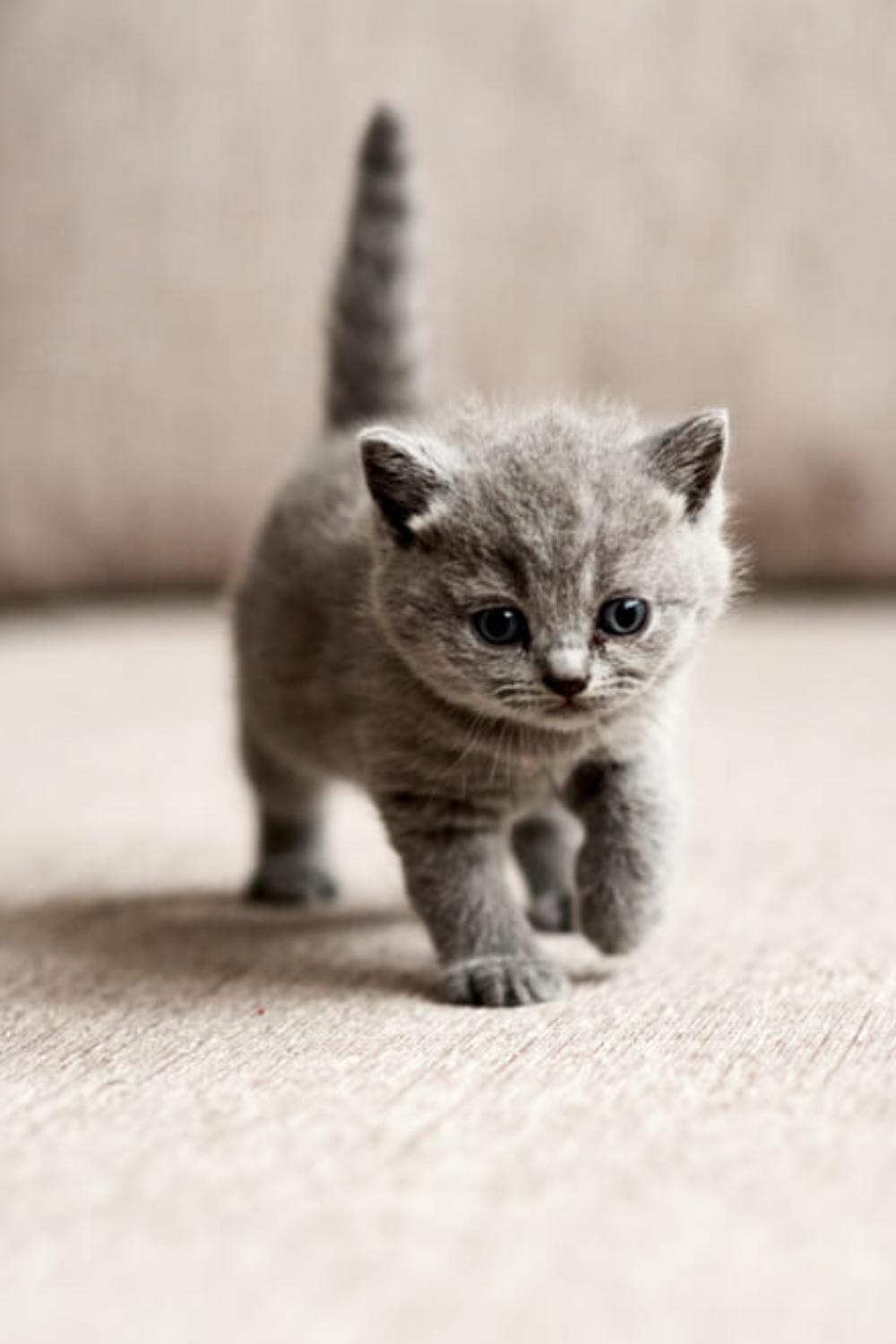 31 Baby Katzen Baby Katzen Baby Katzen Bilder Susse Tiere
