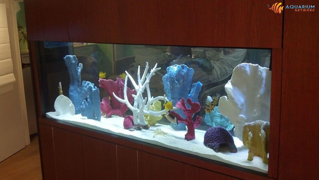 Aquarium Design Aquarium Design Aquarium Network