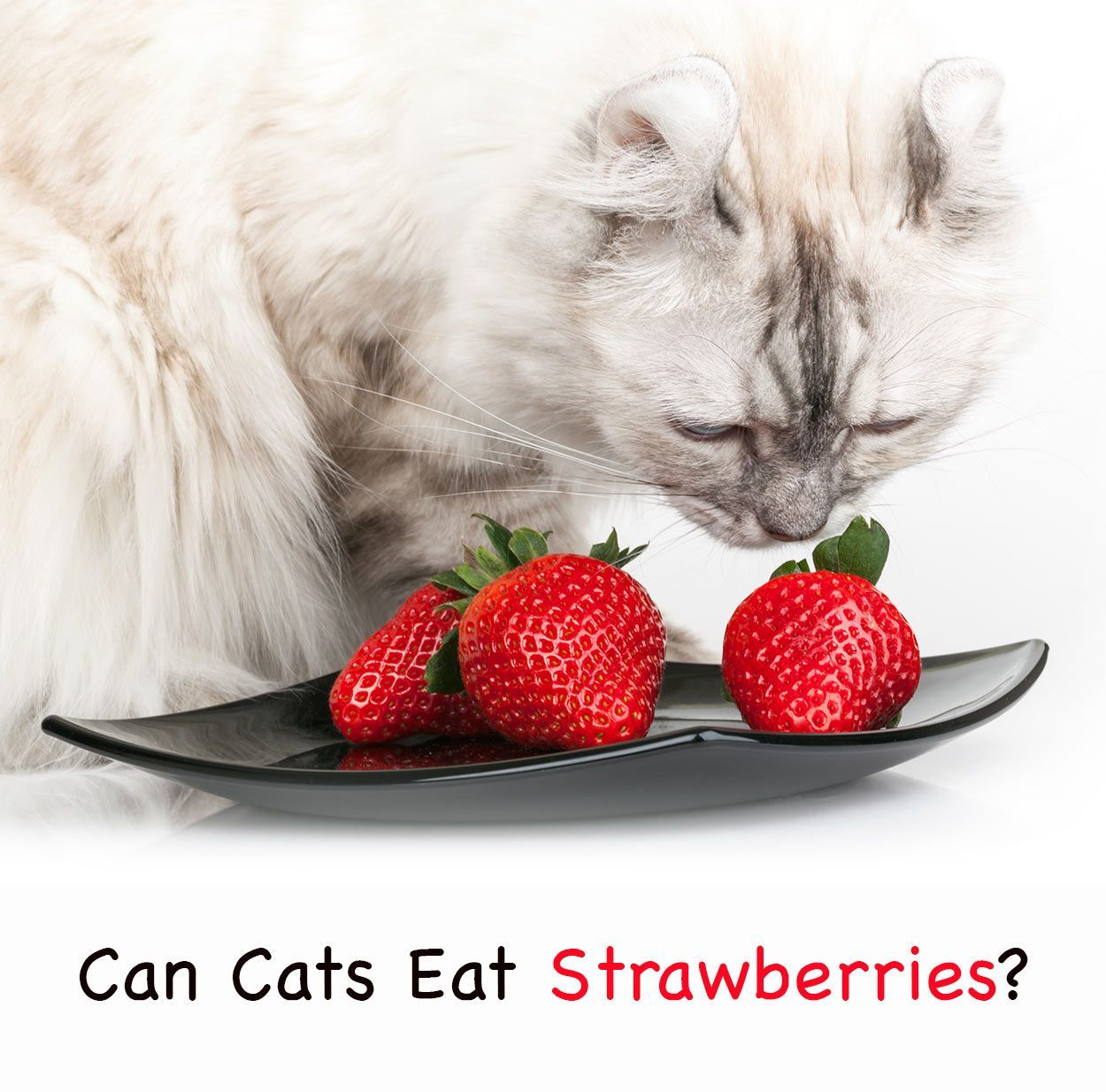 can cats eat strawberries? Whats safe for my cat to eat