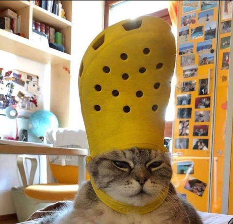 H Gata Moy Aytoanakhryx8hke Neos Papas Pic Twitter Com Op5pjbpnp3 Funny Cat Wallpaper Cats Cat Memes