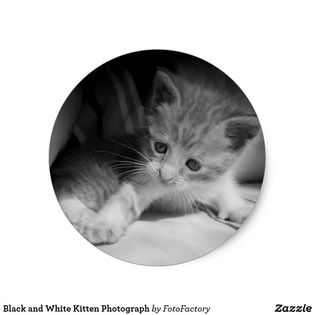 Black And White Kitten Photograph Classic Round Sticker Zazzle Com Black And White Kittens White Kittens Kitten