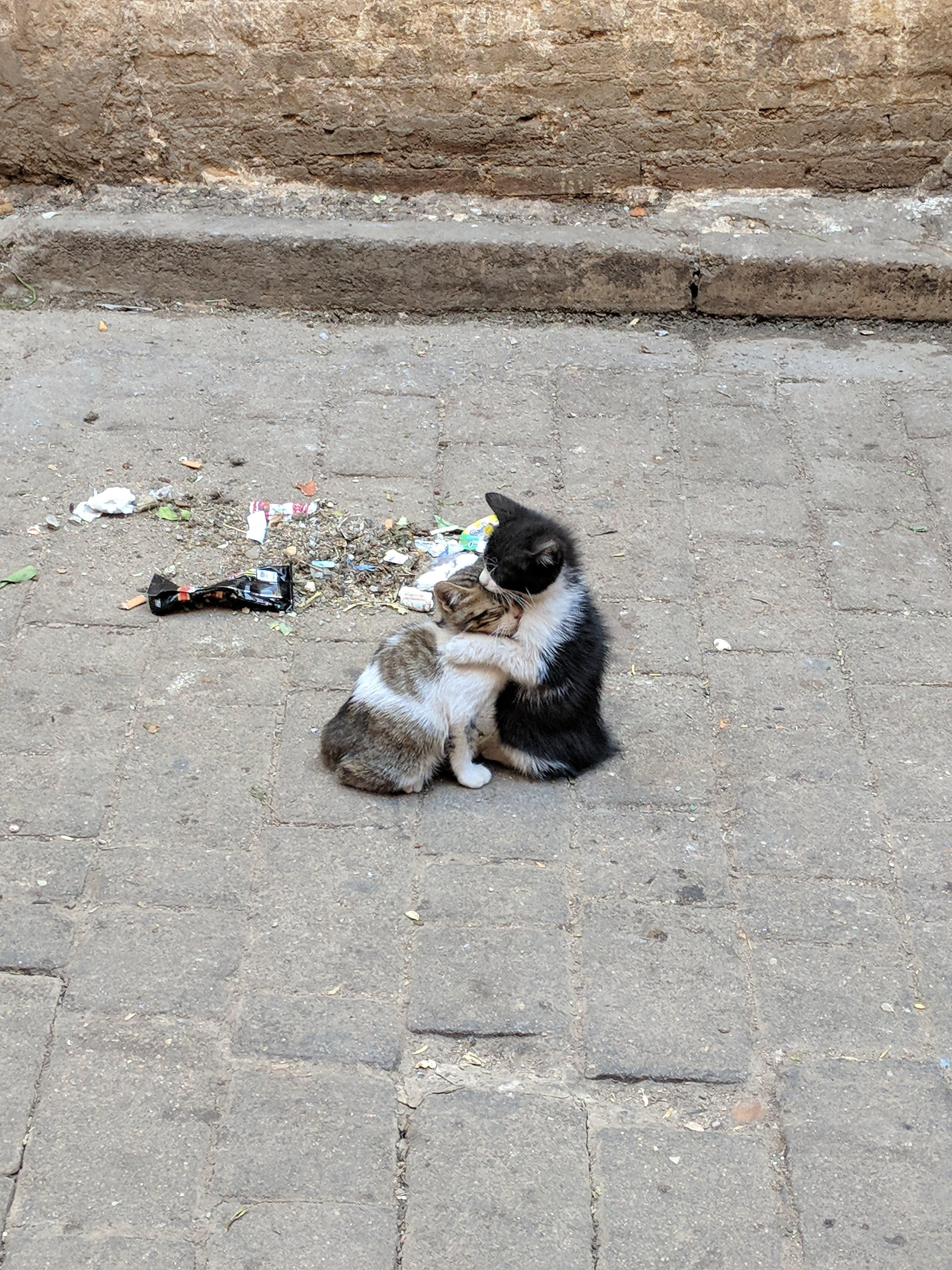 Hugging Kittens In The Streets Of The Medina In Fez Moroccohttps I Redd It Oneo7g8jf3711 Jpg Kittens Cute Cats Cool Pets