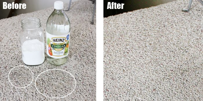 Vinegar On Carpet For Dog Urine