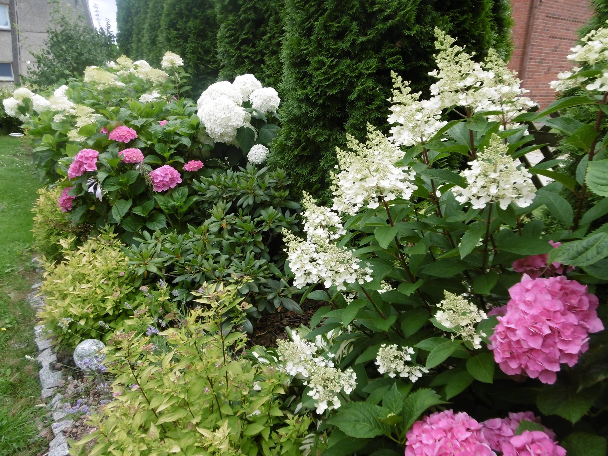 Hortensje Ogrodowe Rododendrony Hortensje Bukietowe Drzewiaste Anabell Tawuly Japonskie Hosty Zurawki A Nawet Lawenda Garden Pictures
