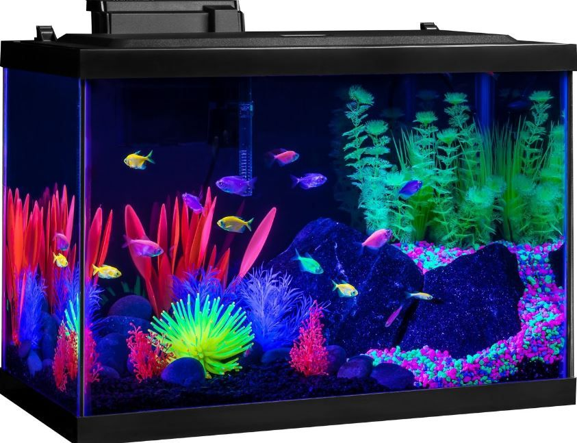 Pin On Fish Tank Ideas