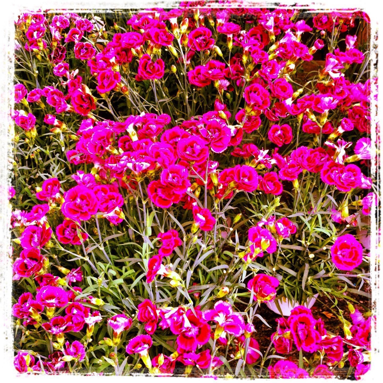 Grande variedade de flores na Jardiland.