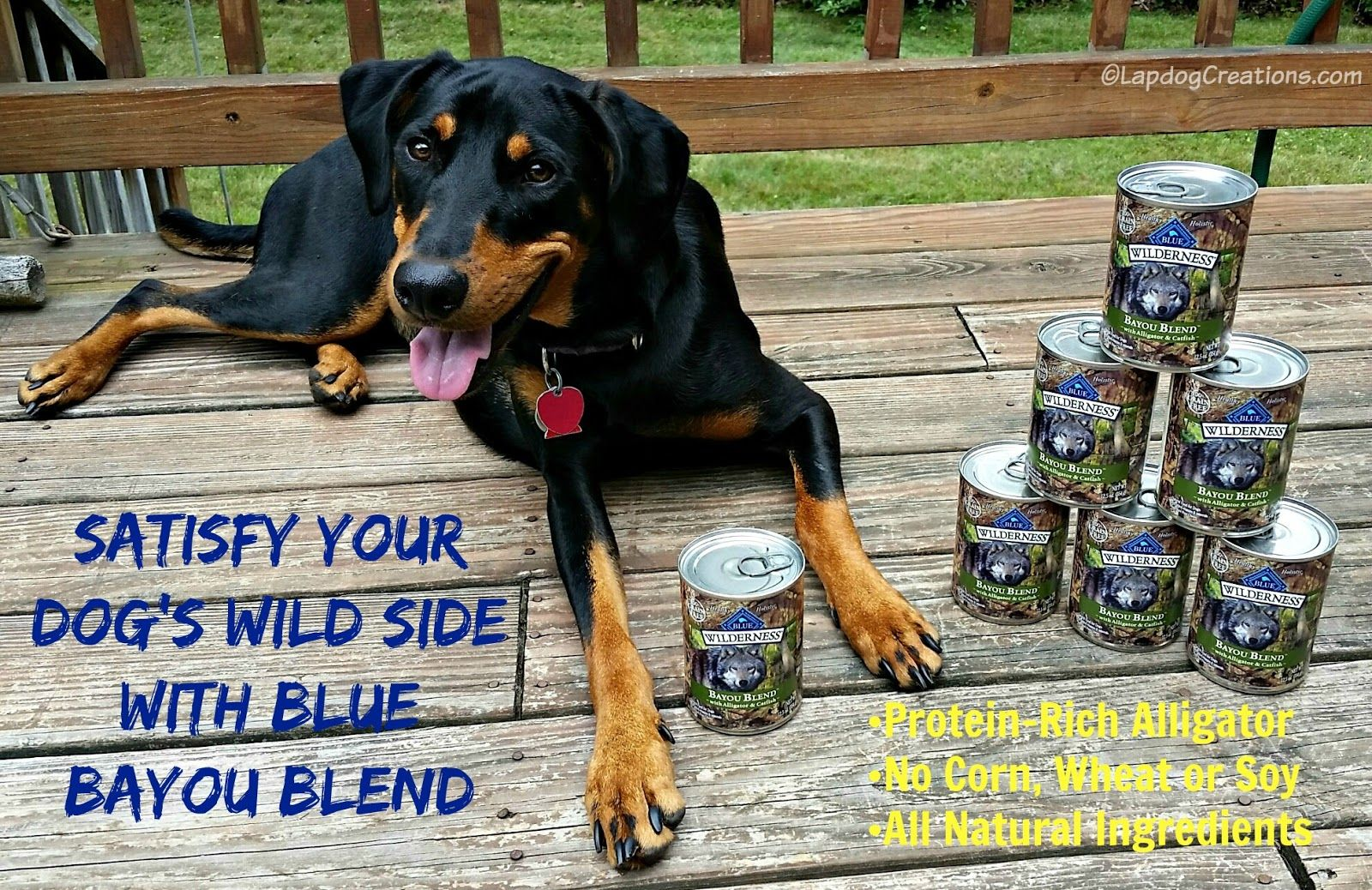 Satisfy Your Dog's Wild Side with #Blue Bayou Blend #ChewyInfluencer #DobermanMix #Alligator #DogFood ©LapdogCreations #ad