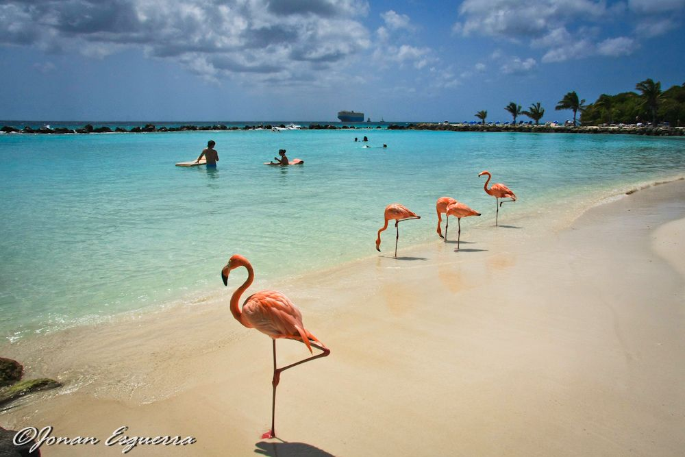 Aruba Caribbean Flamingo beach Untitled