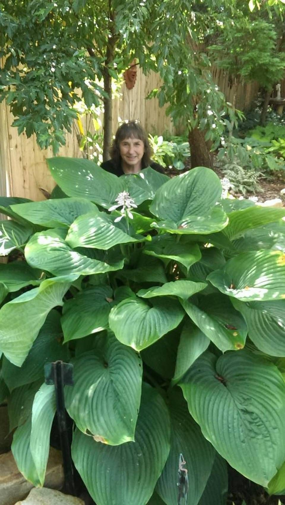 In My Garden Meet Empress Wu Garden Ideas More Hosta Gardens