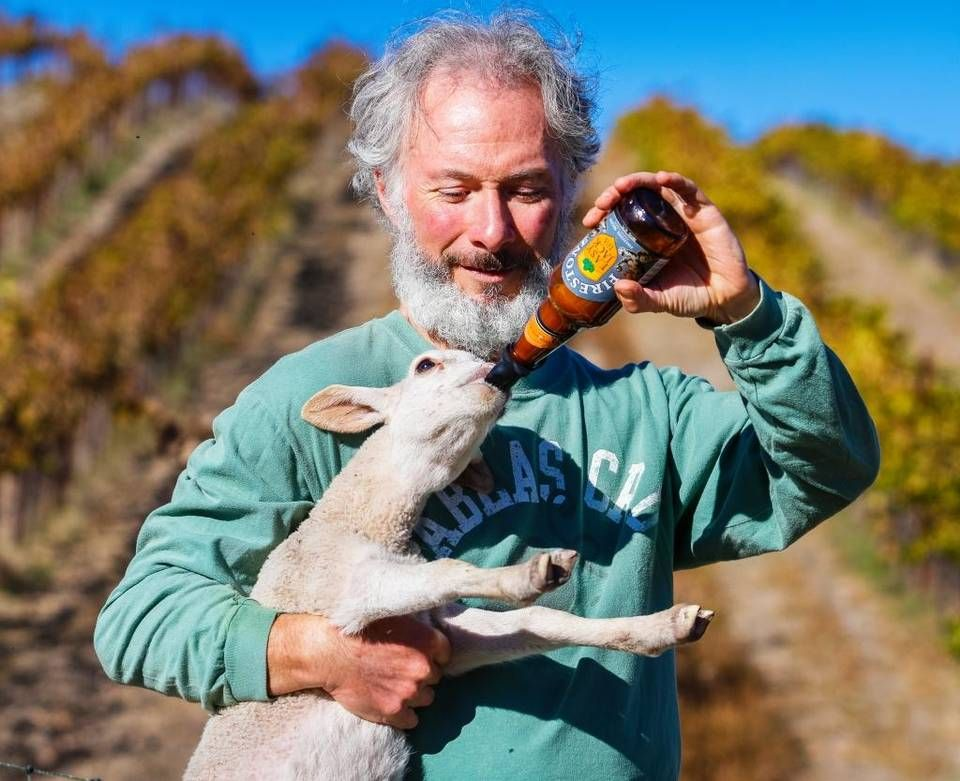Tablas Creek Vineyard uses animals to till and fertilize the land after harvest. Beer bottles double as milk bottles at Tablas Creek Vineyard, where Gustavo Prieto feeds one of the baby lambs that is part of a herd of sheep — guarded by alpacas, donkeys, a llama — used to build healthy soil on its estate. After harvest, the animals are released back into the vineyard to eat, fertilize and till the soil.