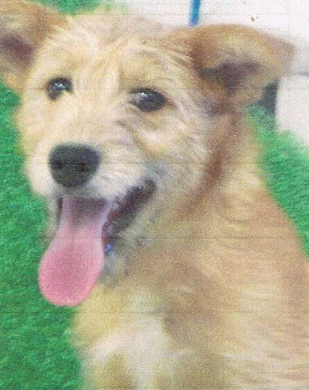 Adopt Reily On Terrier Mix Shelter Dogs Terrier Mix Dogs