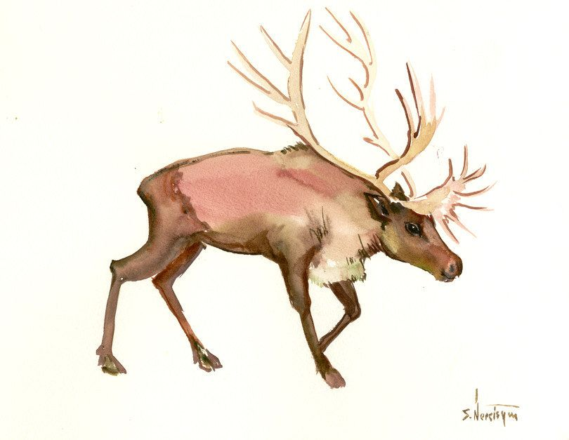 Reindeer Original Watercolor Painting 15 X 12 In Animal Art