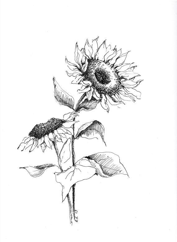 Sunflower print sun flower drawing pen and ink art