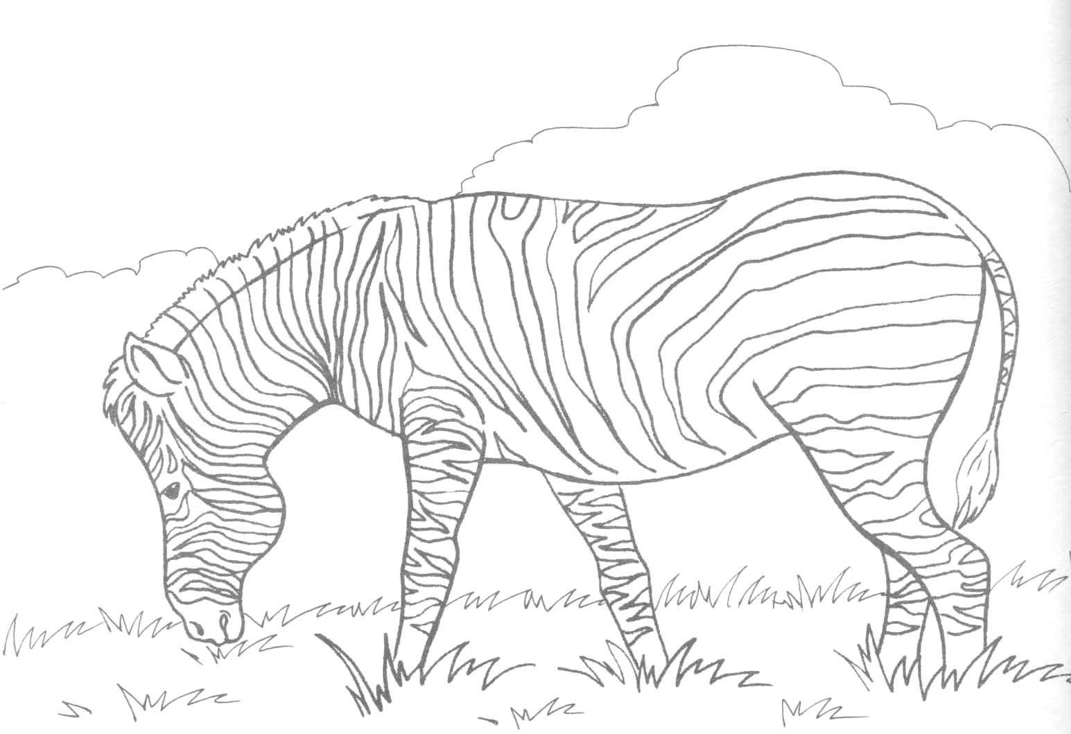 Coloring pages of zebra print pictures animal coloring free
