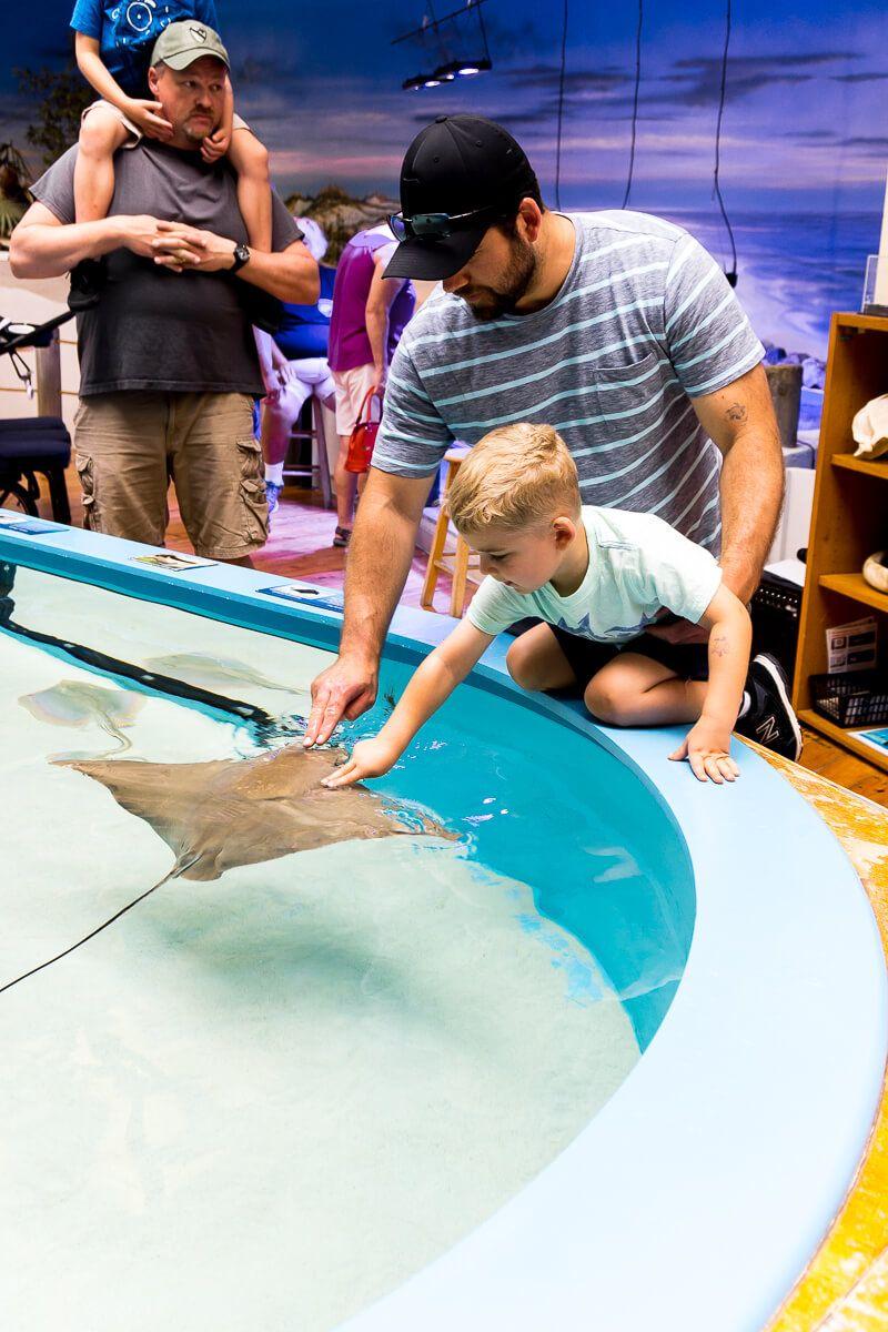 Pet Stringrays At The Daytona Beach Marine Science Center