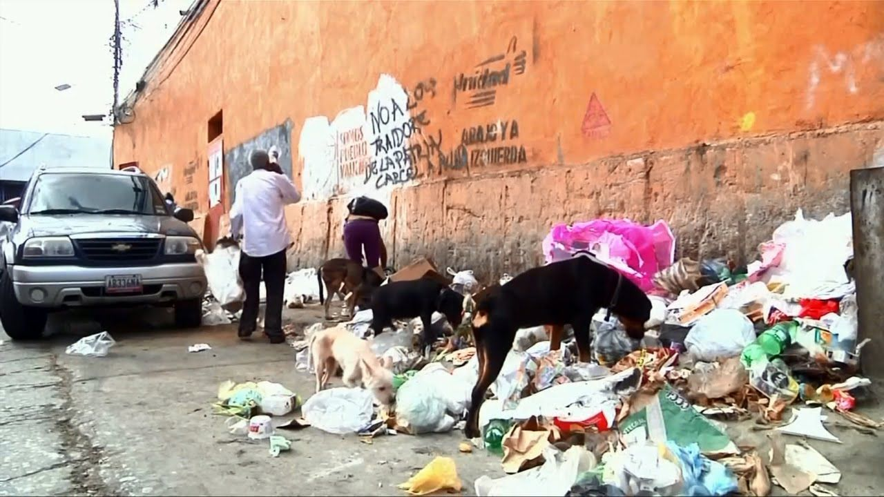 Struggling to feed families, Venezuelans abandon pets