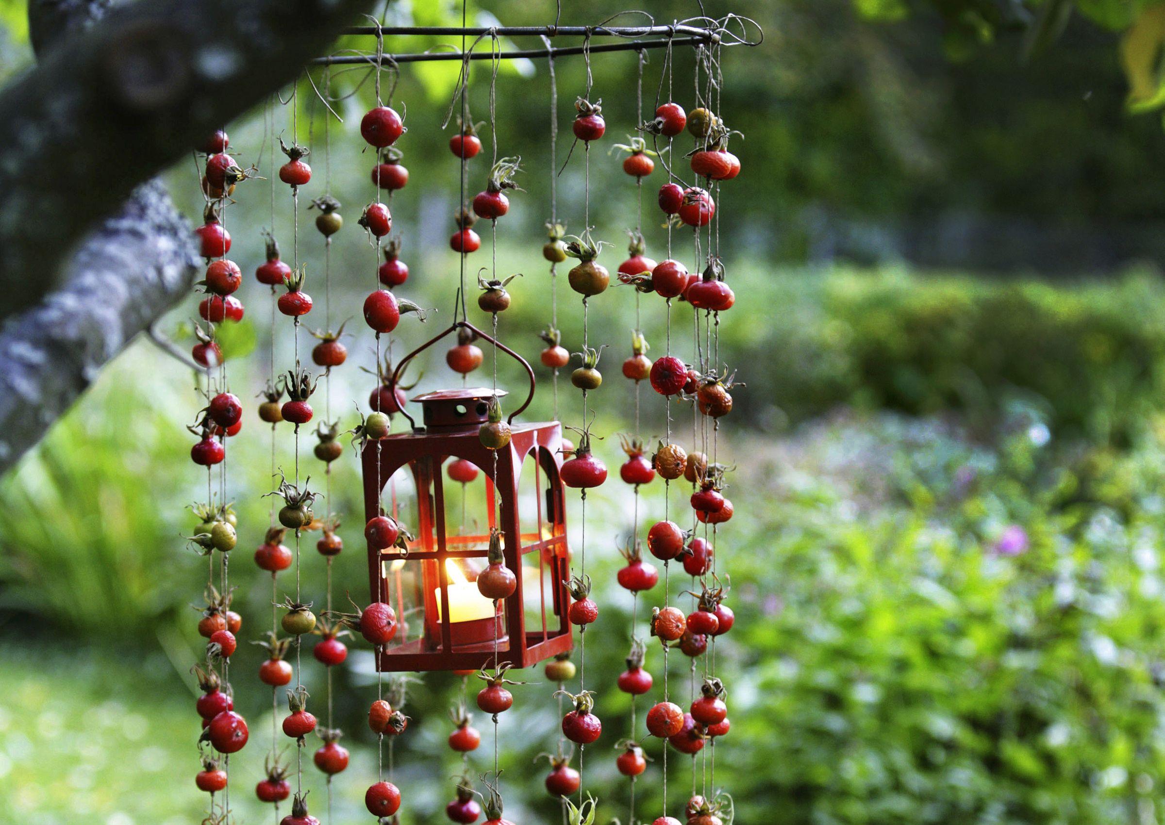 Poimi korillinen ruusunmarjoja ja askartele niistä syksyinen tunnelmanluoja pihalle. Katso Viherpihan ohjeet ja hyödynnä ruusupensaiden marjat.