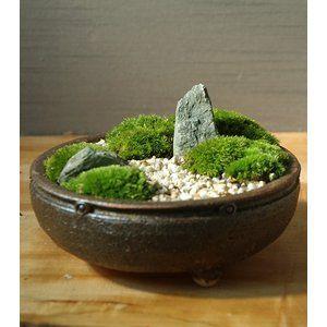 小さな世界で雄大な景色を【苔盆栽(信楽焼鉢)】 :koke986:みどり屋 和草(にこぐさ) - 通販 - Yahoo!ショッピング #bonsaiplants