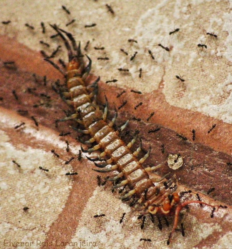 insetos perigosos e venenosos - Pesquisa Google