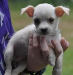 Bertha Beasley Is An Adoptable Maltese Dog In Orlando Fl Meet