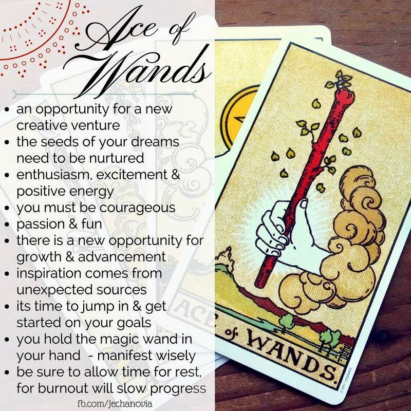 Ace of wands tarot learning tarot card meanings tarot