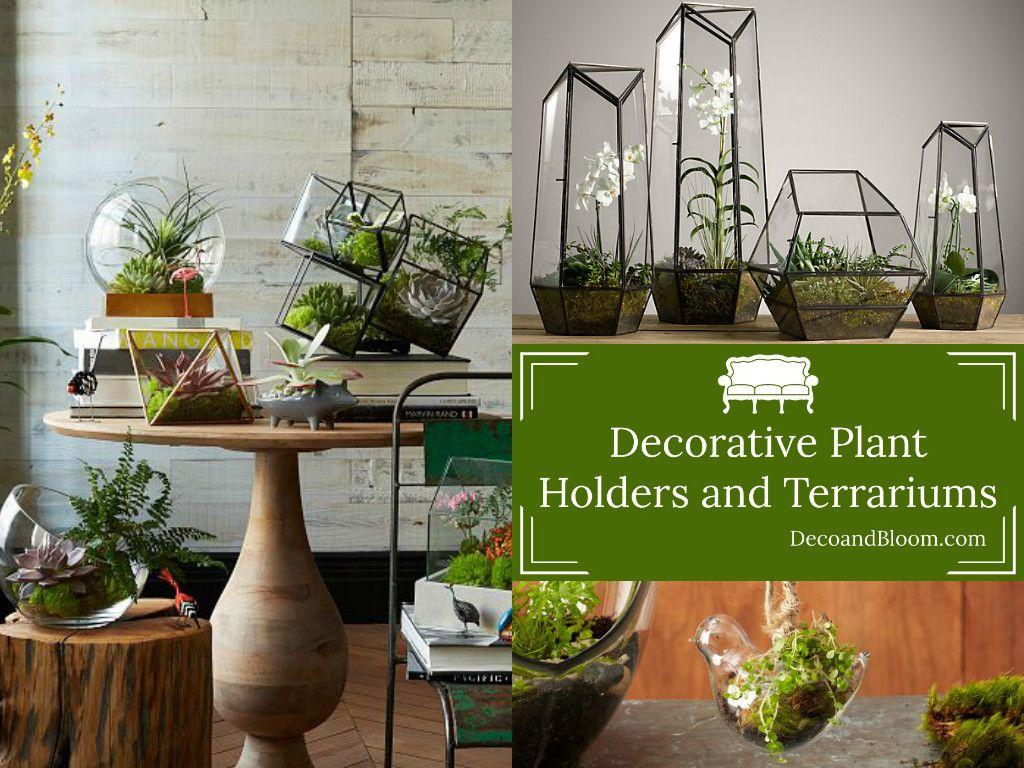 decorative plant holders and terrariums terraria plants and rh pinterest nz