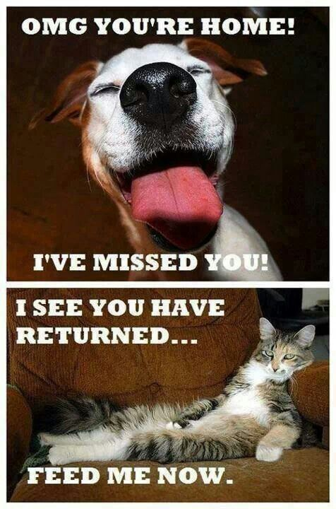 Cats & dogs...