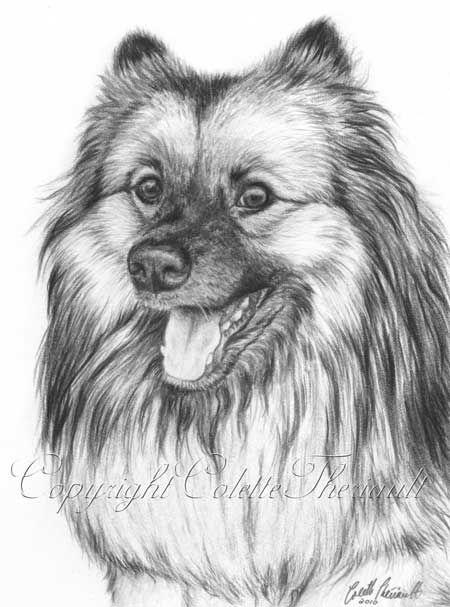 Pencil Drawings of Bears | Keeshon Drawing-graphite pencil drafting film by Sudbury Animal Artist ...