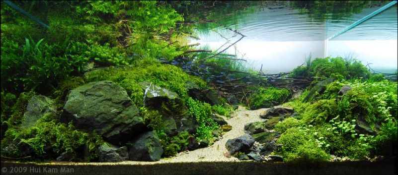 Best Ideas Aquascaping With Stone And Wood Grass awesome ...