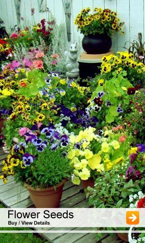 Nurserylive 6000 Nursery Plants Seeds Bulbs Pots Planters Online In India